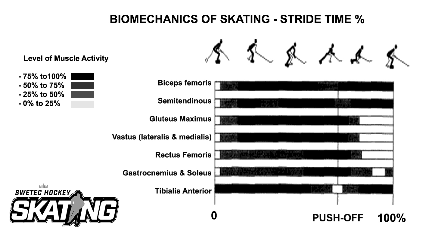 biomechanic_stride